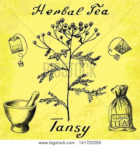 Tansy hand drawn sketch botanical illustration. Vector drawing. Herbal tea elements - tea bag bag mortar and pestle. Medical herbs. Lettering in English languages. Grunge background