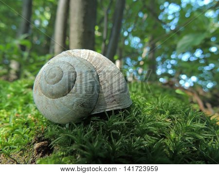 Snail's Shell on the mossy surface in woodland