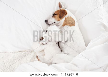 Sleeping dog at bed. Pet at home