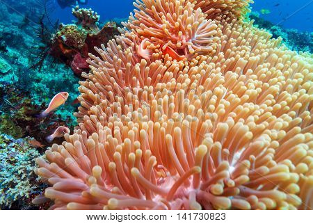 Tropical Fishes Near Colorful Coral Reef