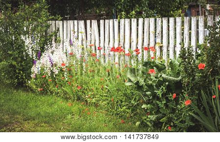 shabby old fence with white wooden beams, green grass and red flowers
