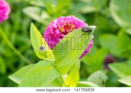 beetle eating leaf on purple flower with bulb tight crop
