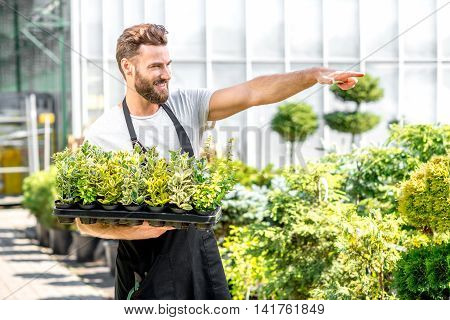 Handsome gardener in black apron pointing forward holding pots with plants in the greenhouse. Seller or worker in the plant shop