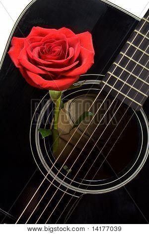 Red Rose Inside Old Black Acoustic Guitar