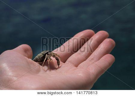 Hand holding hermit crab on blurred water background