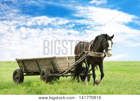 Horse with cart on the farm