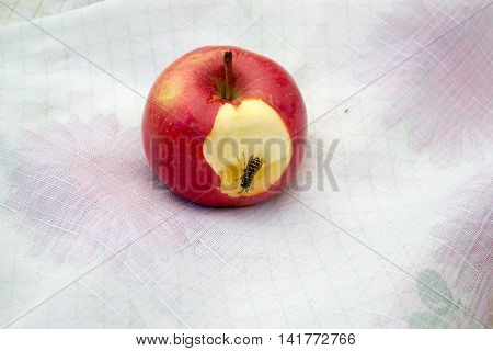 Close view of a wasp on an apple