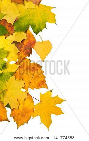 Background group autumn orange leaves isolated on white with clipping path