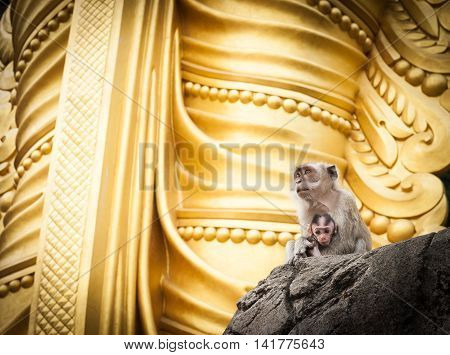 Mother holding baby monkeys of Batu Cave sitting at base of golden statue of Lord Muragan Hindi shrine Kuala Lumpur.