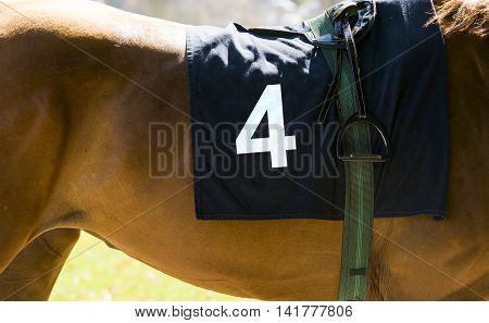 Horse Racing, Close Up On Brown Horse With Number 4