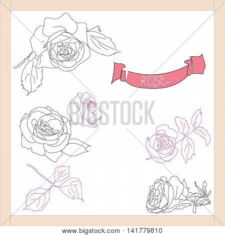 The buds of roses in different angles and stems.