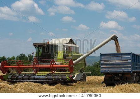 Harvest. Harvesting of wheat. Harvester loads harvested grain.