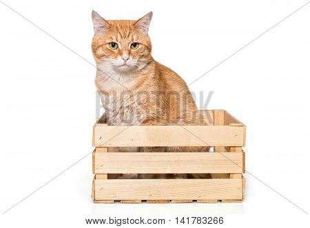Orange house cat sits quietly in a wooden box isolated on white