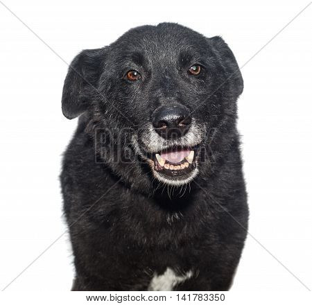 Portrait of a stray dog isolated on white