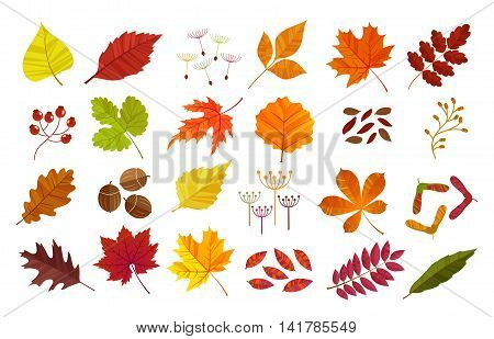 Autumn leaves set, isolated on white background. Cartoon flat style, vector illustration.