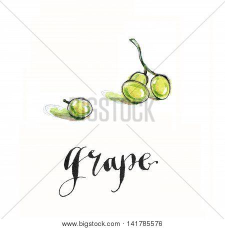 Green grape hand drawn - watercolor Illustration