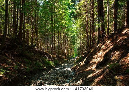 Broken erosion stone road in a mountain green forest