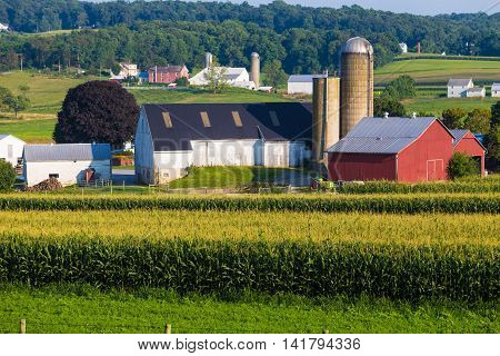 Paradise PA - August 6 2016: A large farm with red and white barns in rural Lancaster County.