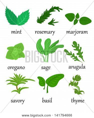 Set Of Different Special Herbs Which Are Using In Cooking With Titles Realistic Isolated Vector Illu