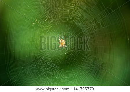 the web is a big beautiful spider on green background beautiful spider web closeup
