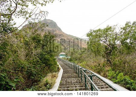 Long stairway leading up to the mountain with gold shine plant