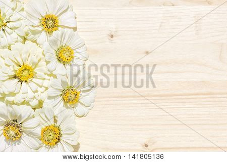 Background of the inflorescence of white zinnias on a natural wooden board