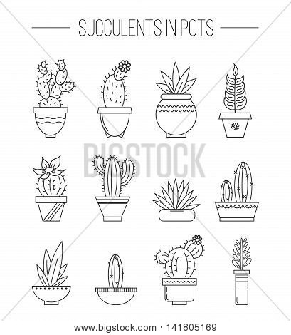 Set of succulent plants and cactuses in pots. Linear botanical vector icons.