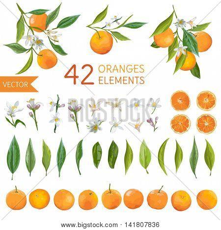 Vintage Oranges, Flowers and Leaves. Lemon Bouquets. Watercolor Style Oranges. Vector Fruit Background.