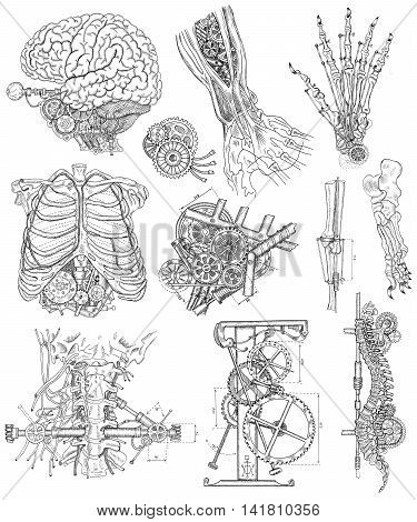 Graphic linear set with body and mechanical parts, and old mechanisms.  Steampunk and ancient technology concept. Brain, hand, chest and throat of robot. Engraved illustrations isolated on white