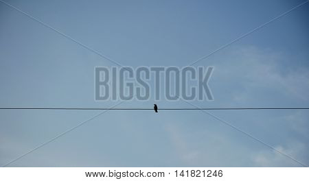 Bird on electric pole against clear sky background. simply composition.