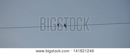 Two birds on electric pole against clear sky background. simply composition.