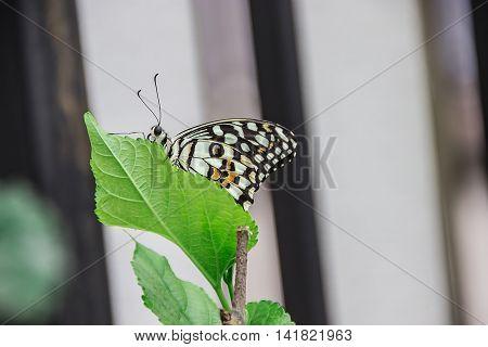 Butterfly. Butterfly on flower. Butterfly in tropical garden. Butterfly in nature.