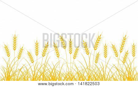 Wheat ears on a white background. Border of wheat ears and stalks.
