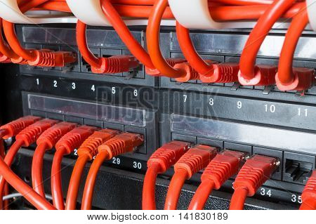 Close up of red network ethernet cables connected to black switch in data center