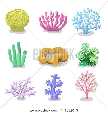 Colorful corals and Reef Set of isolated. Nature marine on a white background. underwater flora, fauna.