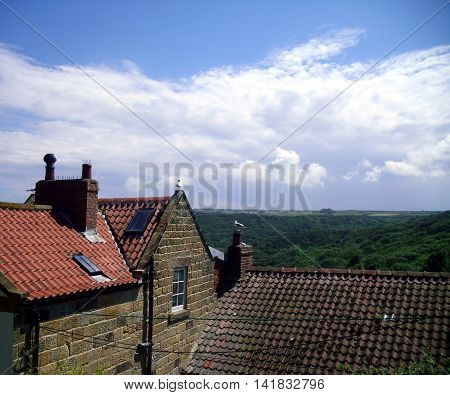 Gulls of Rooftops at Runswick Bay with cliffs in the background