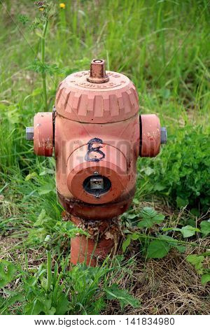 close up of a fire hydrant in the middle of bushes