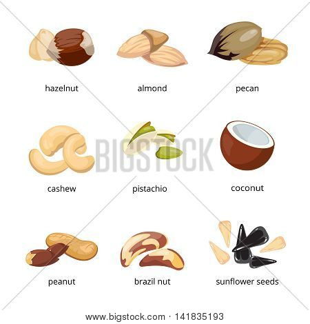 Cartoon nuts vector. Set of nuts walnut and pecan, illustration of vegetarian food nuts