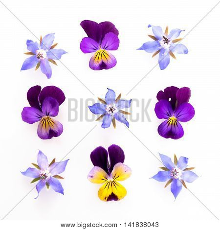 Purple and blue edible flowers: viola and borage - high key image.