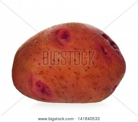 Red new potato isolated on white background close up