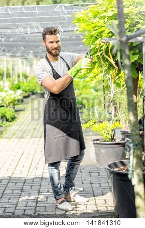 Handsome gardener in black apron pruning a tree in the greenhouse. Growing and taking care of the green plants.