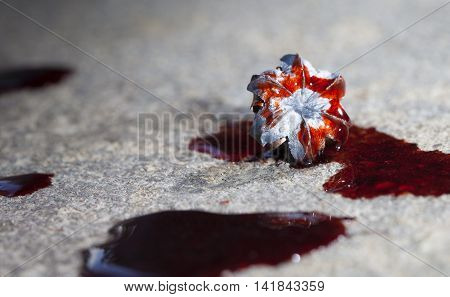 Expanded lead hollow point bullet with blood on the concrete