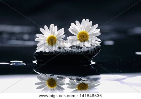gerbera with wet stones on wet background
