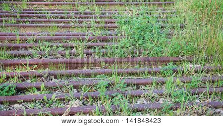 Abstract of rusty abandoned train tracks with overgrown green weeds.