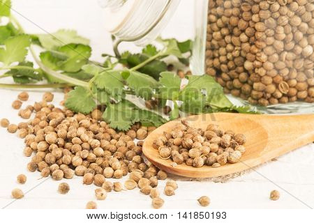 Coriander seeds and the fresh coriander on a white wooden background