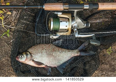 Common Bream Fish On The Natural Background. Catching Freshwater Fish And Fishing Rods With Fishing