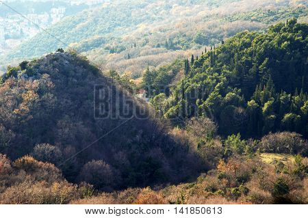Wooded hills on intact forest  in early winter