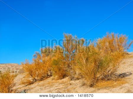 California Sagebrush At Death Valley National Park