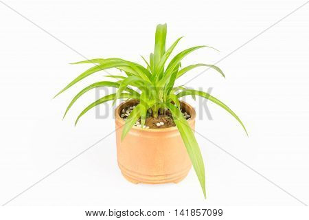 potted plant bracketplant isolated on a white background