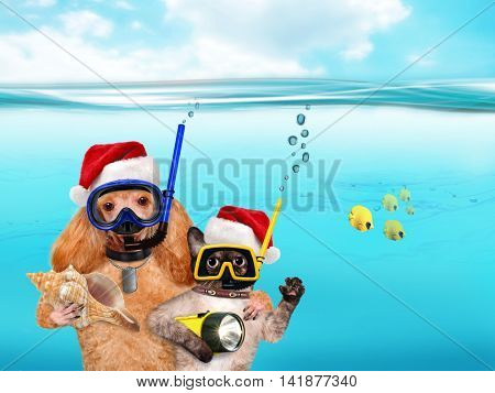 Dog with cat diver in red Christmas hat.